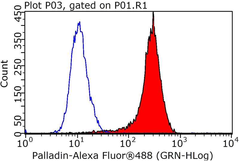 1X10^6 HeLa cells were stained with 0.2ug PALLD,palladin antibody (Catalog No:113503, red) and control antibody (blue). Fixed with 4% PFA blocked with 3% BSA (30 min). Alexa Fluor 488-congugated AffiniPure Goat Anti-Rabbit IgG(H+L) with dilution 1:1000.